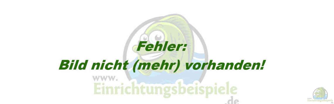 Aquarium von Rainer König: Becken 1257