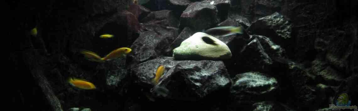 aquarium einrichtungsbeispiele begeisternde aquaristik. Black Bedroom Furniture Sets. Home Design Ideas