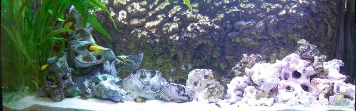 Aquarium von Hawksi (13571): Tropheus