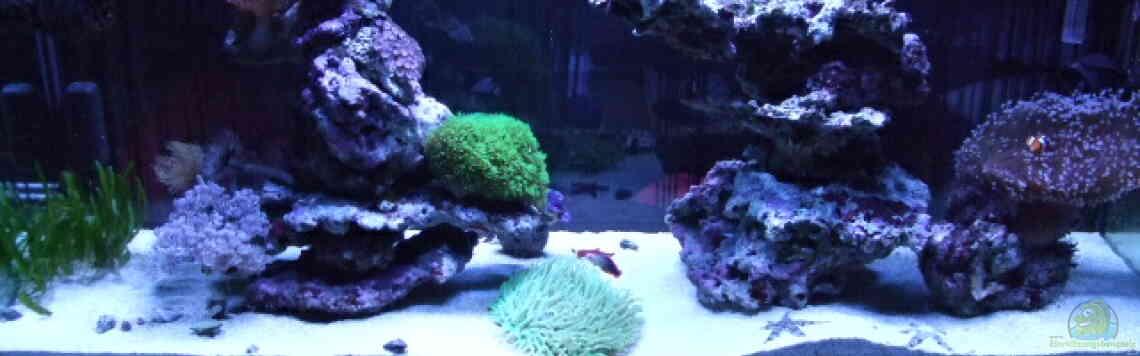 Aquarium von Salzeritis: Becken 5960