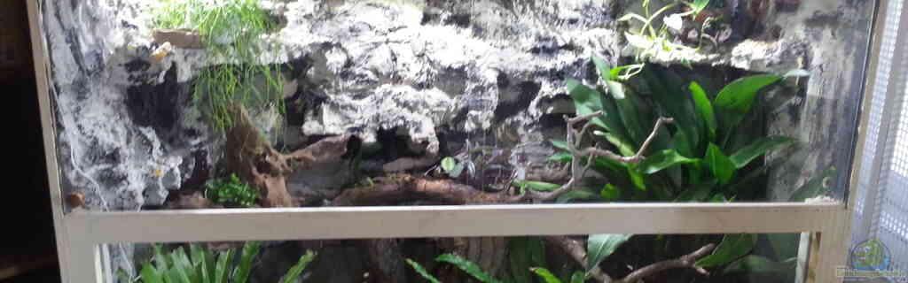 Terrarium für Gekko gekko