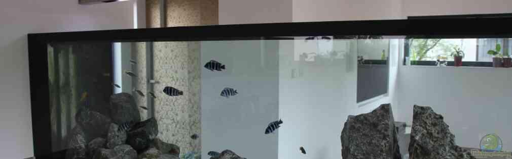 aquarium von anton nano cube 60l. Black Bedroom Furniture Sets. Home Design Ideas