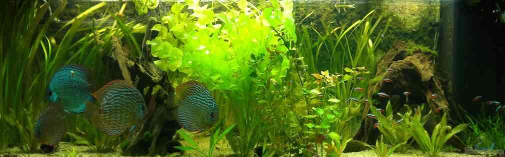 Aquarium von sirko fricke 450l s damerika for Zierfische hannover