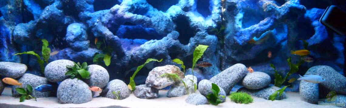 Aquarium von JAMES-JONES (19943): -MALAWI-BECKEN-