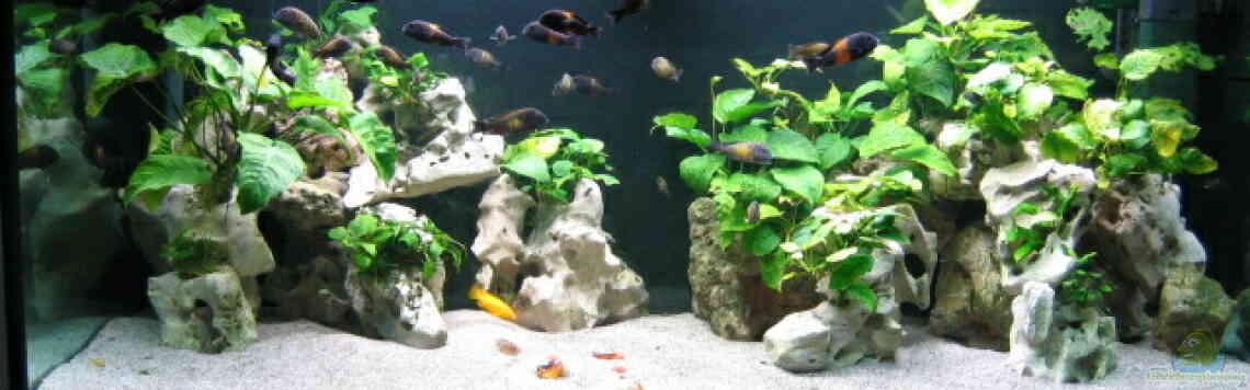 aquarium von frank hofmann becken 214. Black Bedroom Furniture Sets. Home Design Ideas