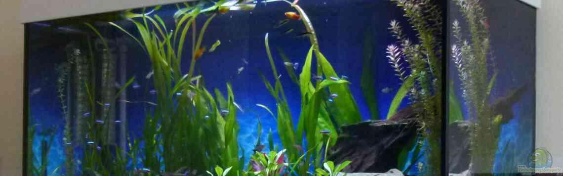 Aquarium von Mc.Maurer (22193): Gesellschaftsbecken