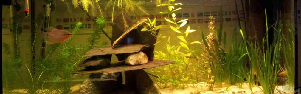Mosaikfadenfisch-Artaquarium