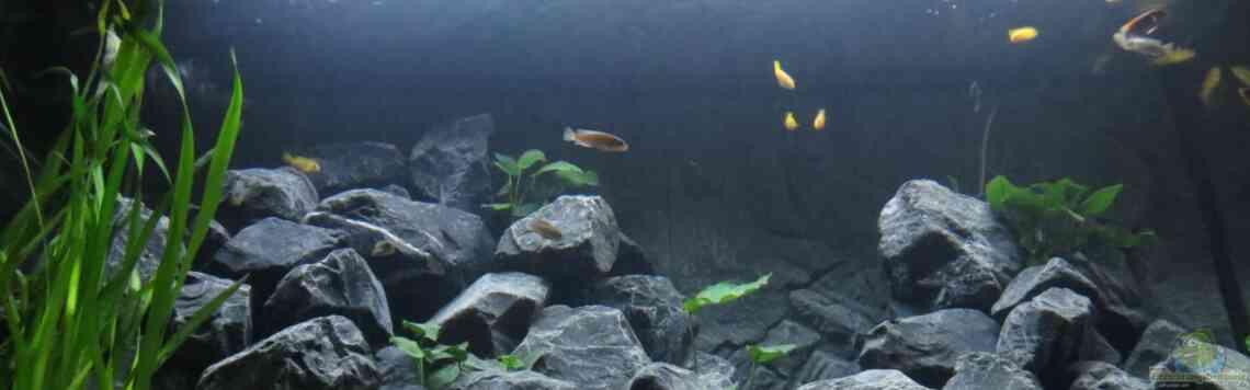 Aquarium von BastiB (29093): Journey in the Mountains