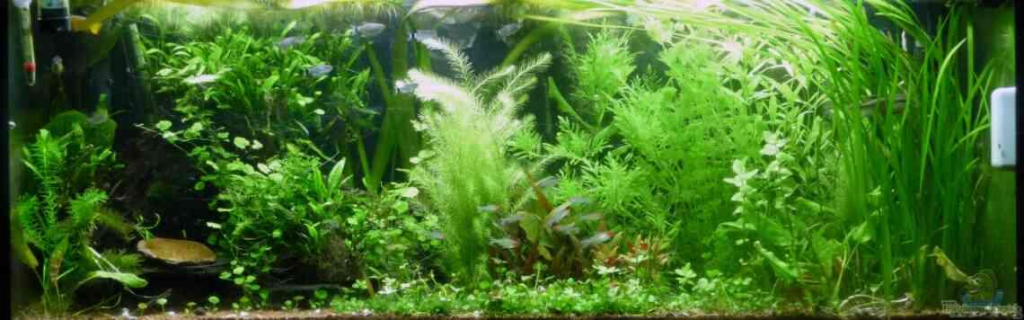 Aquarium Einrichtungsbeispiele - begeisternde Aquaristik
