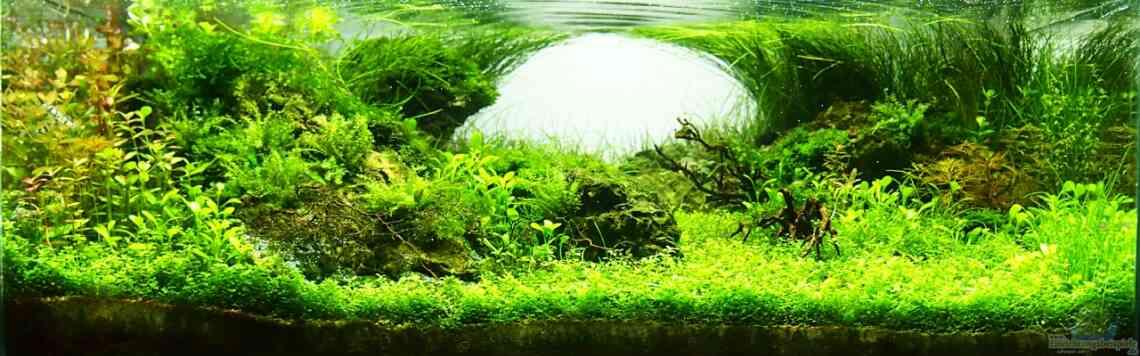 aquarium von fredo fuss 25042 trueby. Black Bedroom Furniture Sets. Home Design Ideas