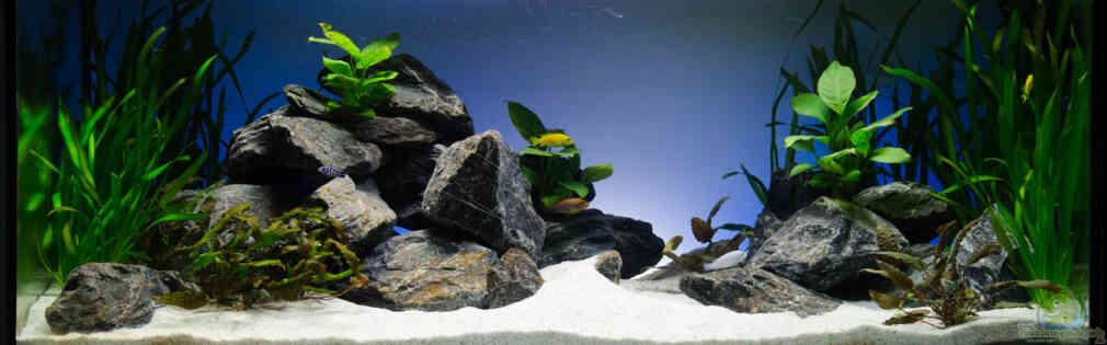 Esempi di acquari con pesci dal lago malawi for Contenitore per pesci