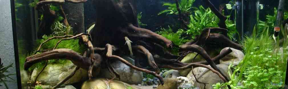 Rhinogobius duospillus-Paradies - Biotop