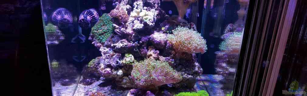 Meine Meerwasserpfütze