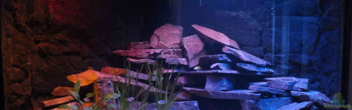 Aquarium von Slay (31434): Porphyr Rocks