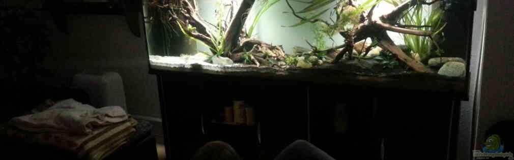 erstes Südamerika Aquarium
