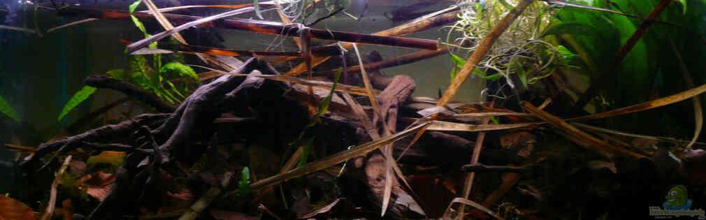 Enigmatochromis II