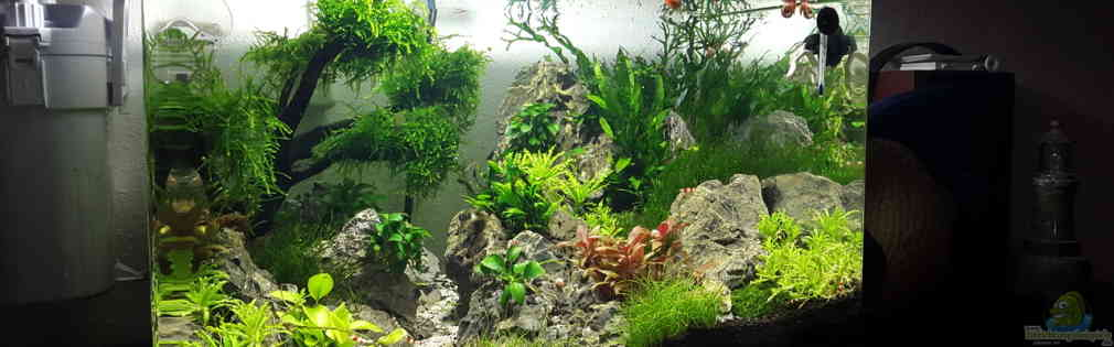 Scapers Tank