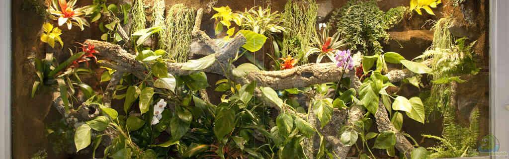 290 cm langes Regenwaldterrarium für Smaragdwarane