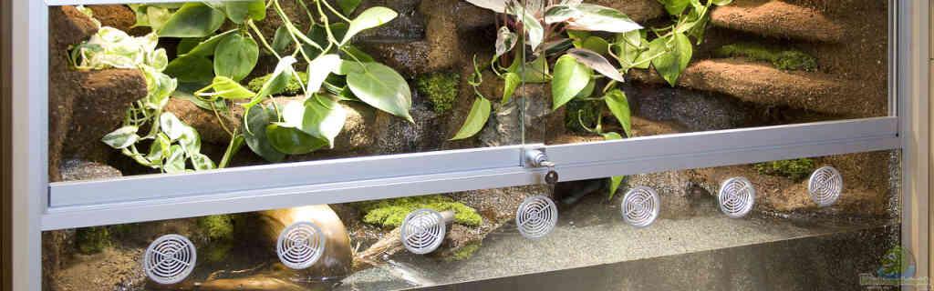 Aquaterrarium-Paludarium für Krokodilschwanzechsen