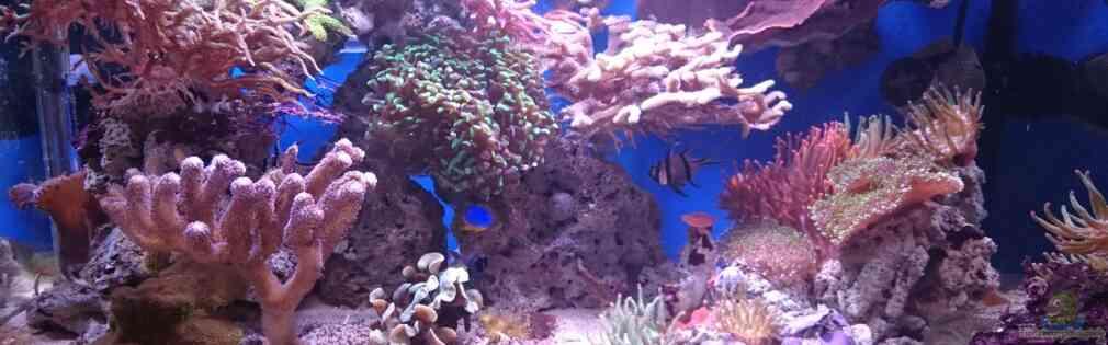 140 Liter Meerwasseraquarium
