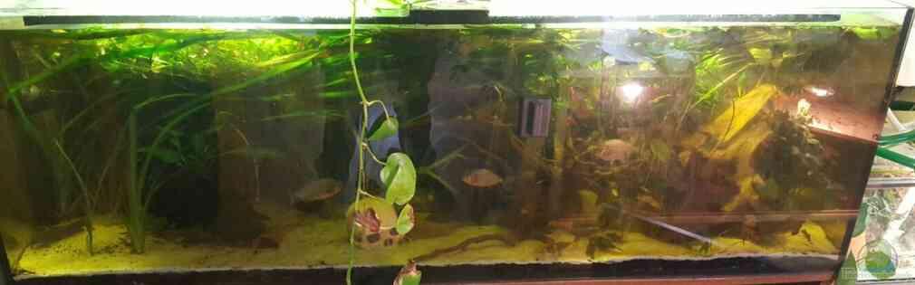 Piranha Becken
