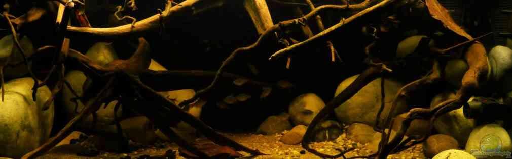 ~Südamerika-Flussbiotop-Aquarium~