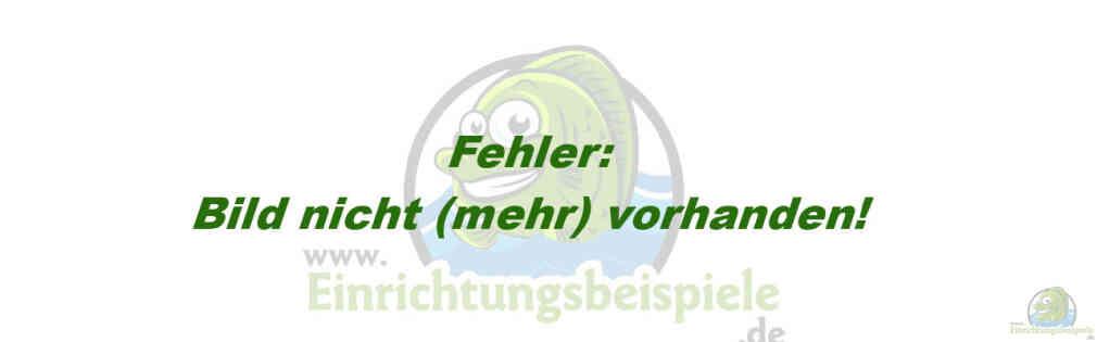 Aquarium von matthias puffer malawitraum for Robuste zierfische