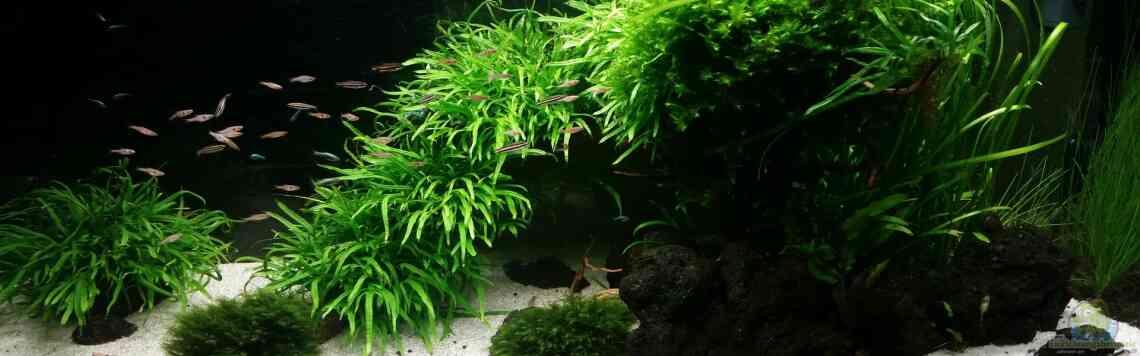 Aquarium von panzerwelsfan 33709 kleine fische for Kleine fische