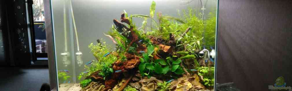 Aquascape Jungle Time by Shiro13