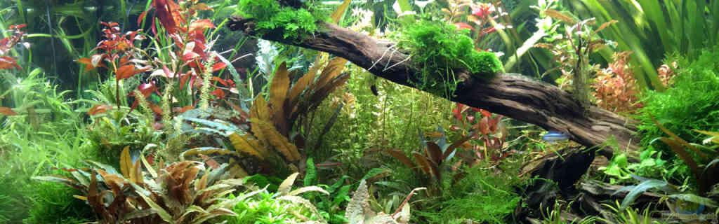 Flur Einrichtungsbeispiele aquarium der südamerikaner aquarium im flur