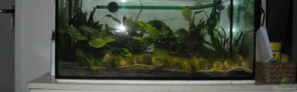 Examples of aquariums with fish from Lake Tanganyika