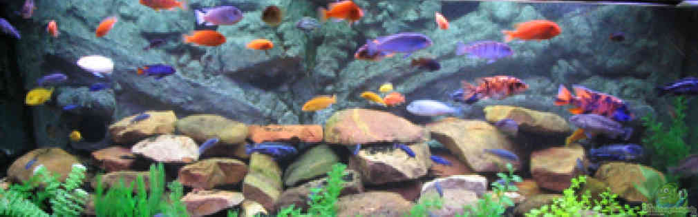 aquarium von lars k pper becken 484. Black Bedroom Furniture Sets. Home Design Ideas