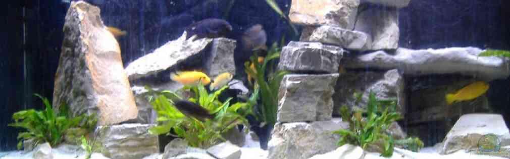 Aquarium von milatz darian becken 562 for Zierfische hannover
