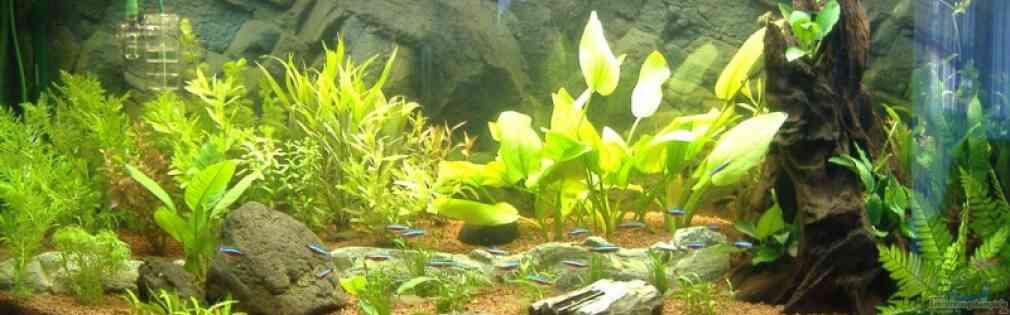 aquarium von robert reinsch becken 7088. Black Bedroom Furniture Sets. Home Design Ideas