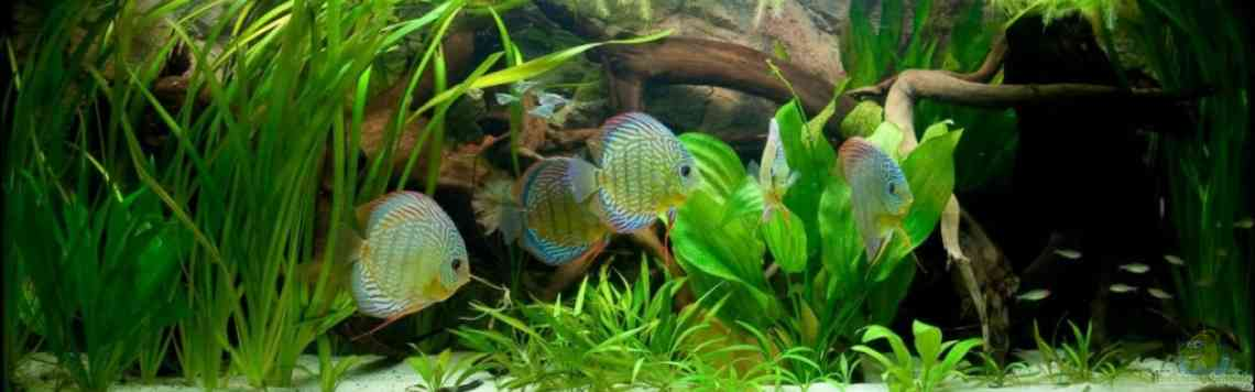 Natural Discus Habitat