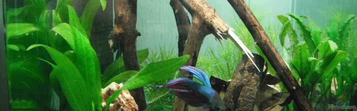 Nanocube Kleines Betta-Aquascape