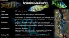 Artentafel - Placidochromis johnstoni