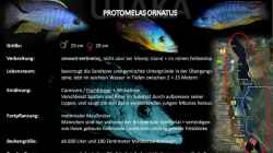 Artentafel - Protomelas ornatus