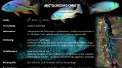 Artentafel - Aristochromis christyi