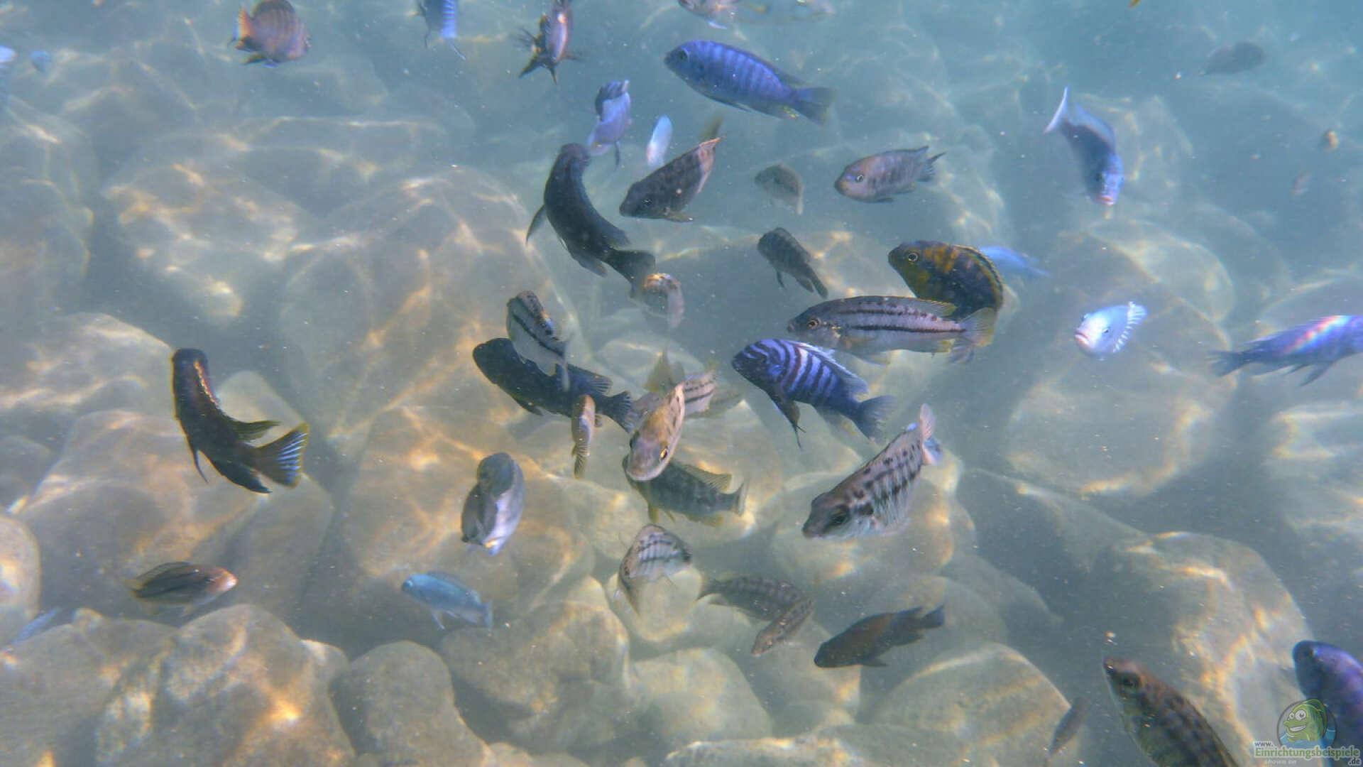 Ein Malawi Aquarium Einrichten Einrichtungsbeispiele