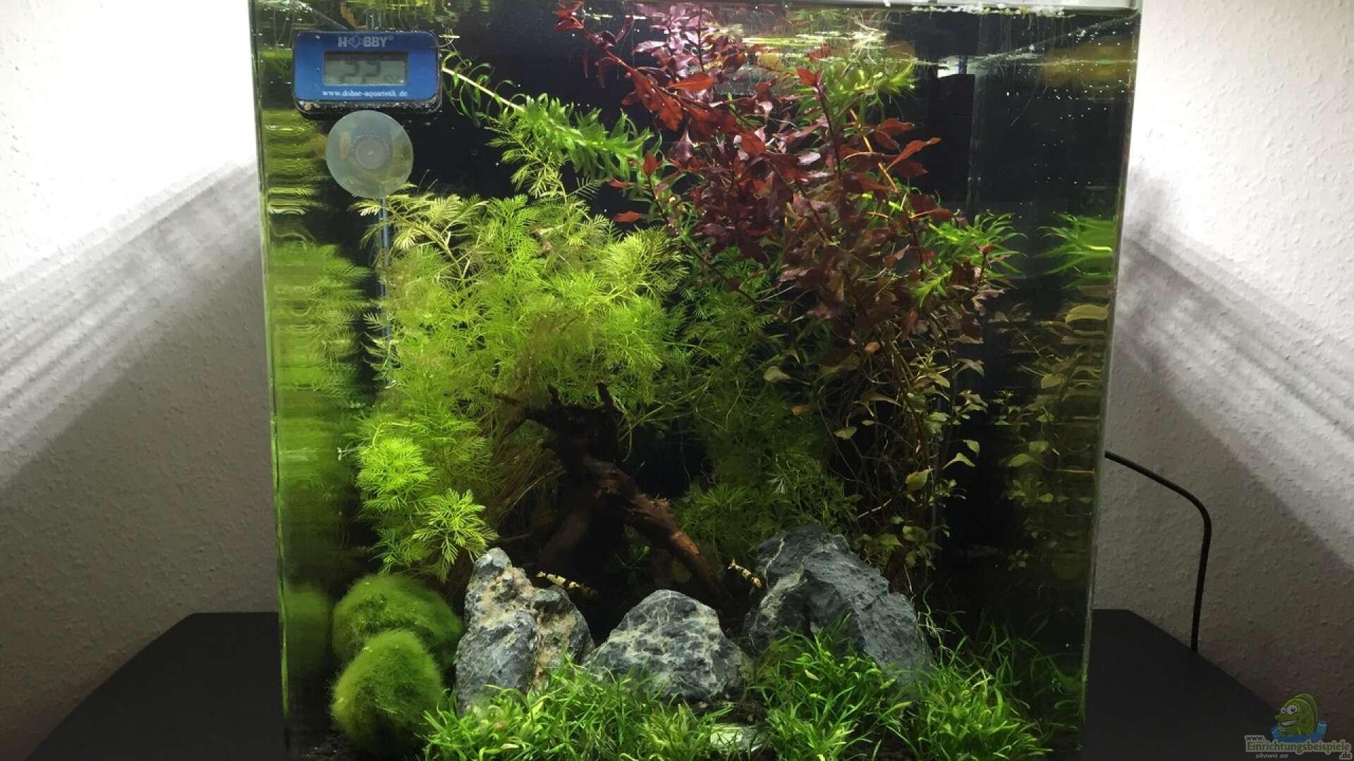 Nano Aquarium einrichten und betreiben