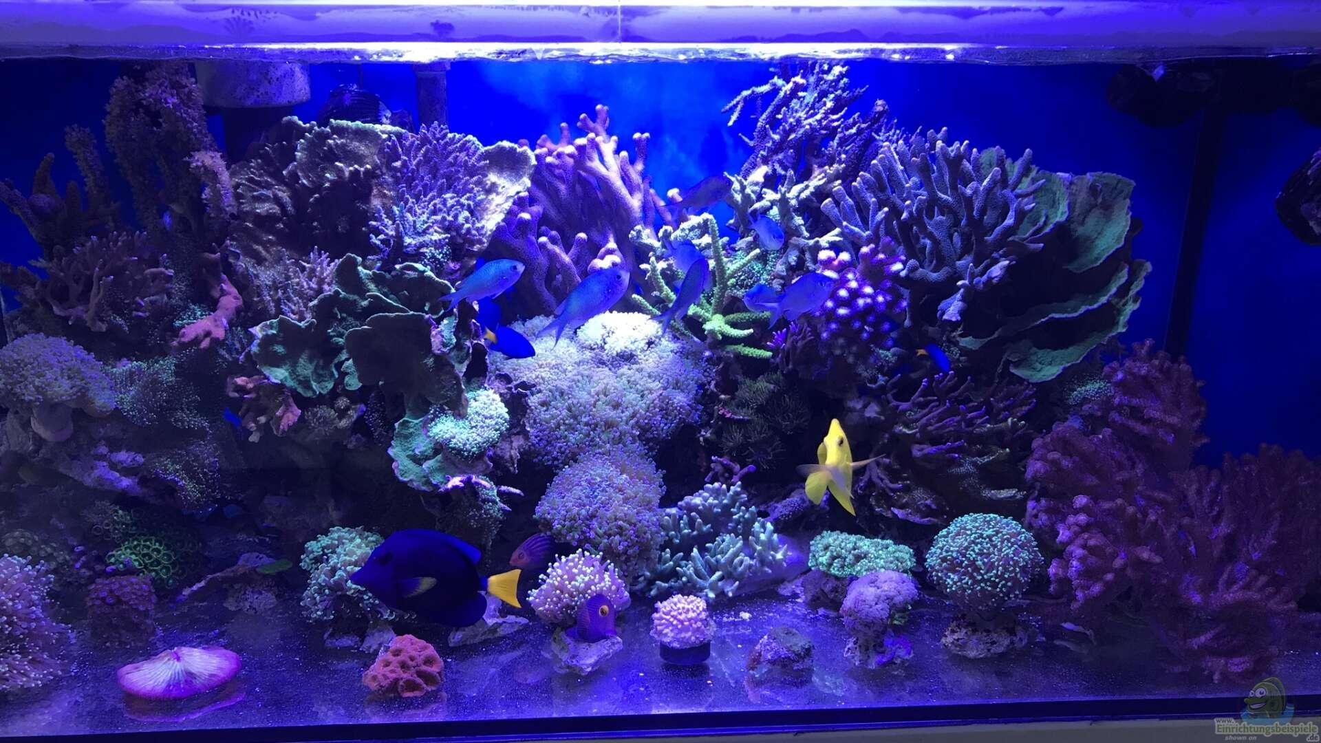 Ein Meerwasseraquarium einrichten