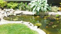 Hauptbild aus Teich