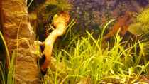 Dekoration im Aquarium Becken 10166