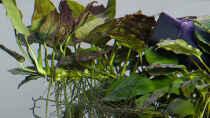 Pflanzen im Aquarium D-$To®M ( My First ) Nur noch als Beispiel