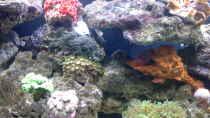 Besatz im Aquarium Irgendwo in der Südsee