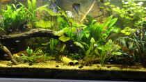 Aquarium Peruaner - wurde aufgelöst -(