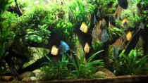 Aquarium Becken 32572