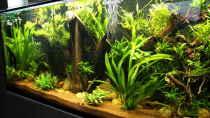 Pflanzen im Aquarium Becken 32572