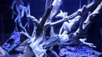 Dekoration im Aquarium Becken 32838